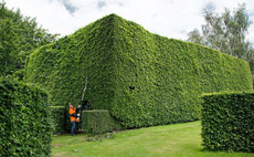 Long-reach-hedge-trimmers